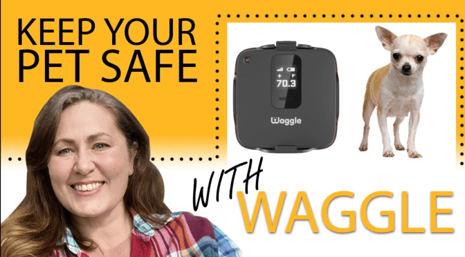 SAVE 50% on Waggle Pet Monitor -LIMITED TIME OFFER (ends 9/30/2021)